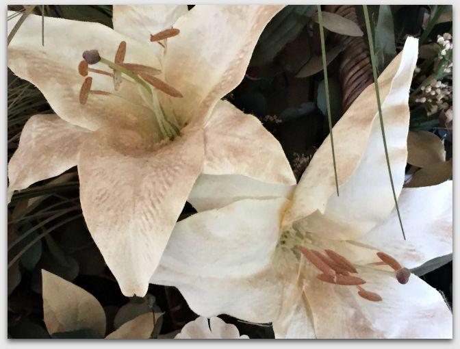 Dusty Lilies